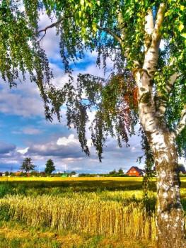 Виктор Шамонин-Версенев СТИХИ И СКАЗКИ - Деревня,пгеница,поле,берёза.jpg